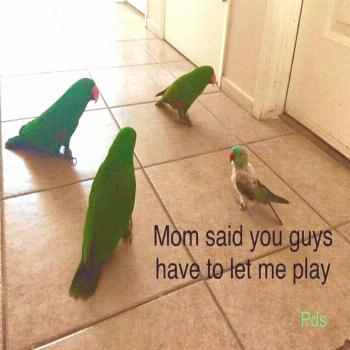21 Birb Memes For The Bird Lovers Out There | CutesyPooh -  21 Birb Memes For The Bird Lovers Out T